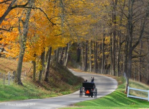 Amish buggy, Holmes Co. OH
