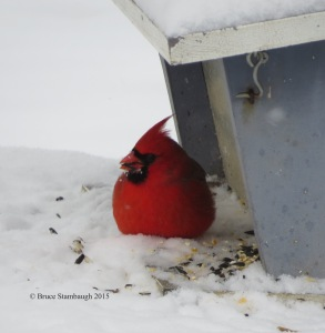 northern cardinal, snow, bird feeder