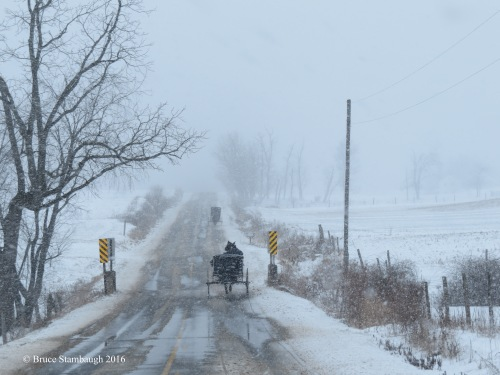 buggies in snowstorm
