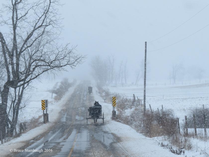 buggies in snowstorm