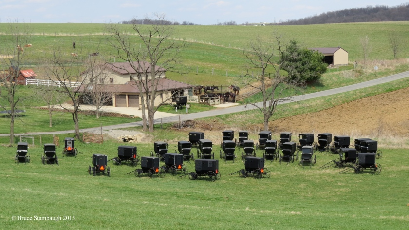 Amish church gathering, Amish buggies