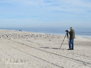 birding on the beach