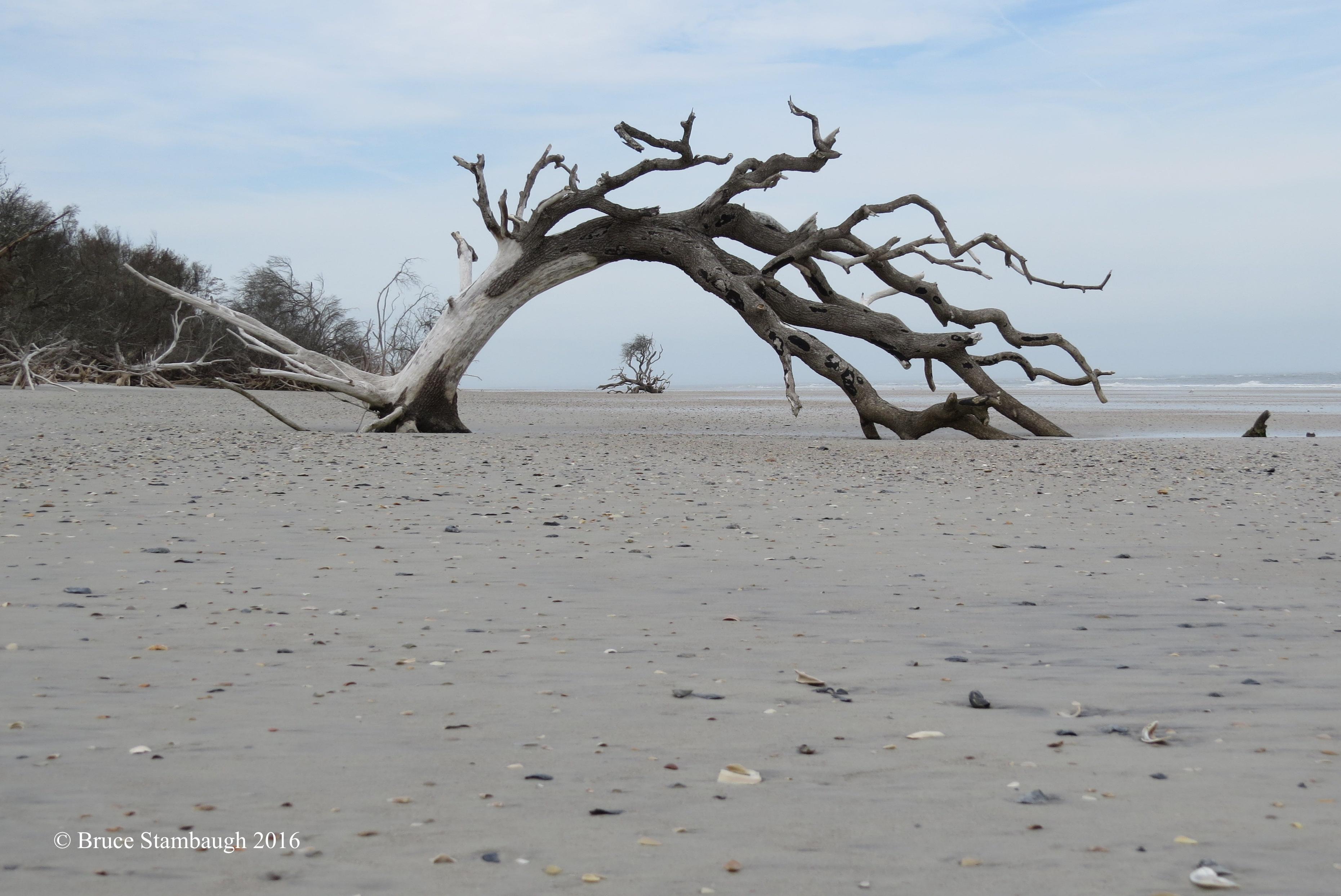 driftwood, art photography