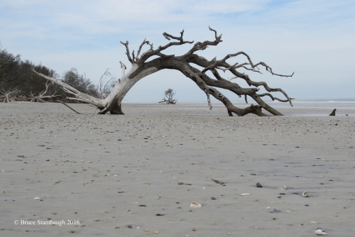 driftwood, art photography
