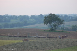 Amish farmer, hay wagons