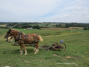 rural life, Ohio's Amish country