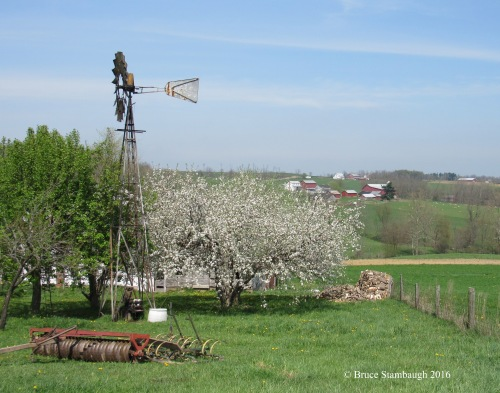 spring blossoms, Ohio's Amish country