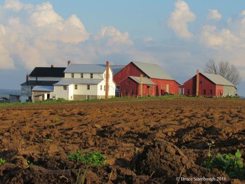 Amish farmstead, furrowed field