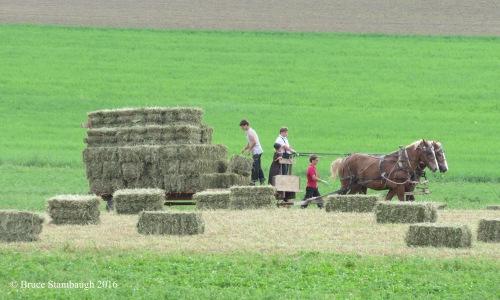 making hay, Ohio's Amish Country