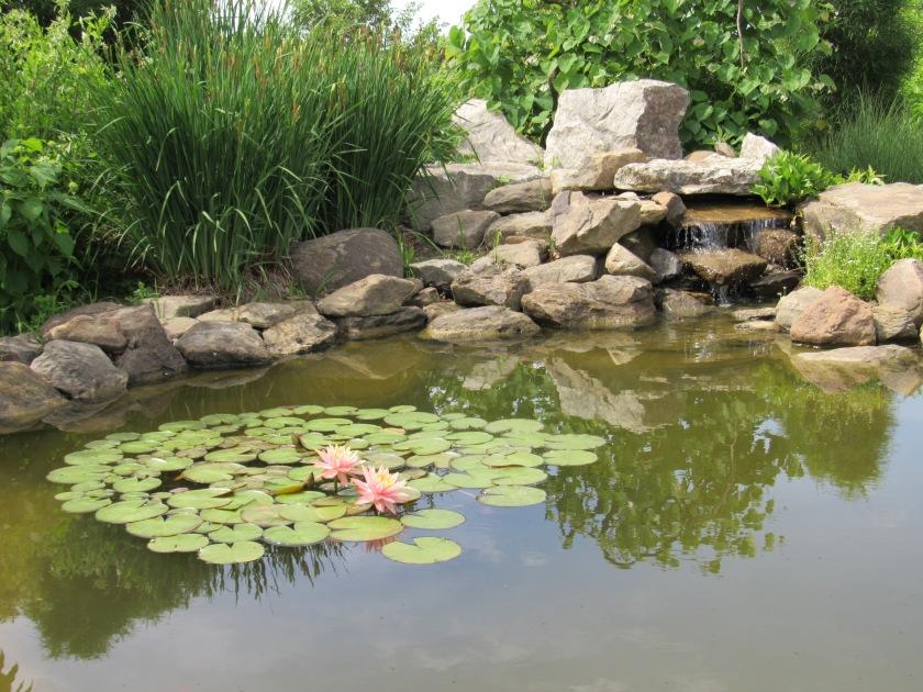 lily pond, OARDC