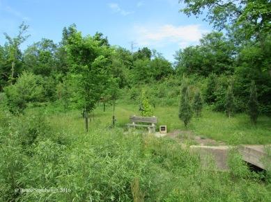 catbird habitat