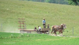 work ethic, Amish gathering hay
