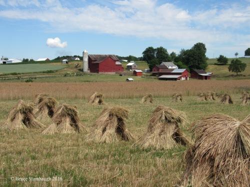 wheat shocks, Amish farming