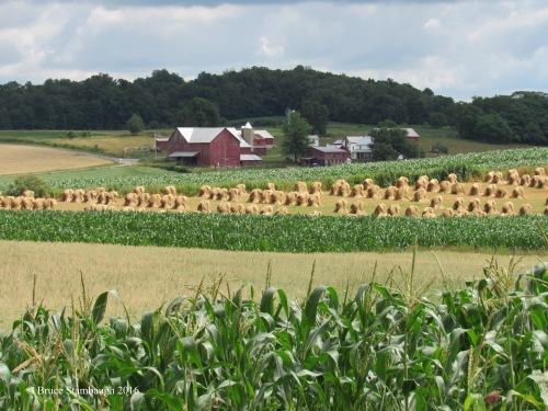 Amish farm, wheat shocks