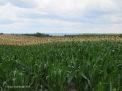 Amish farm, Killbuck Valley