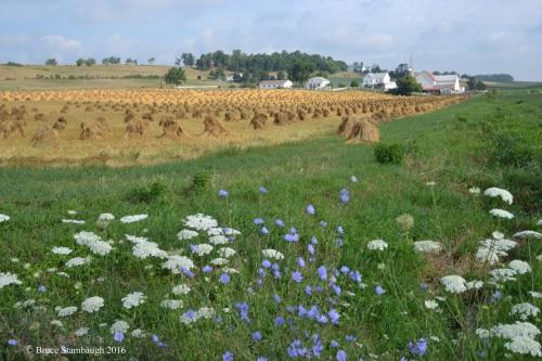 wildflowers, oat shocks