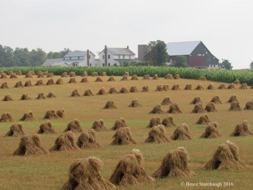oat shocks, Amish farm