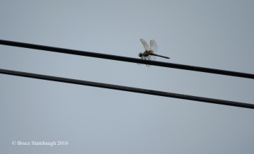 dragonfly, abstract photo