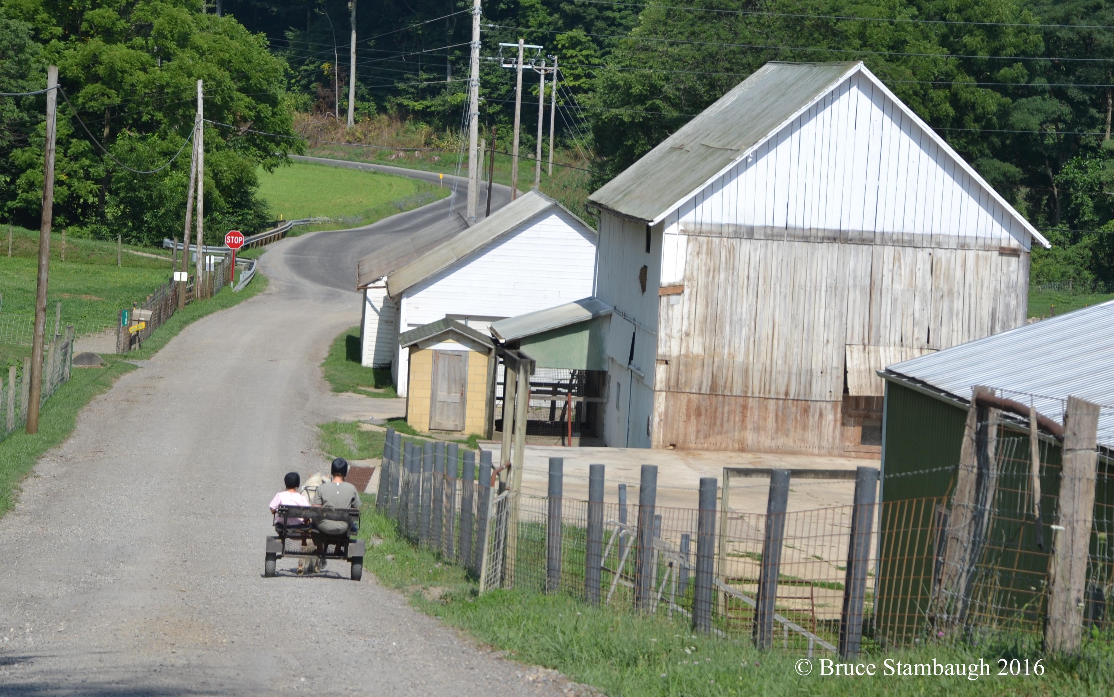 Amish children, pony cart
