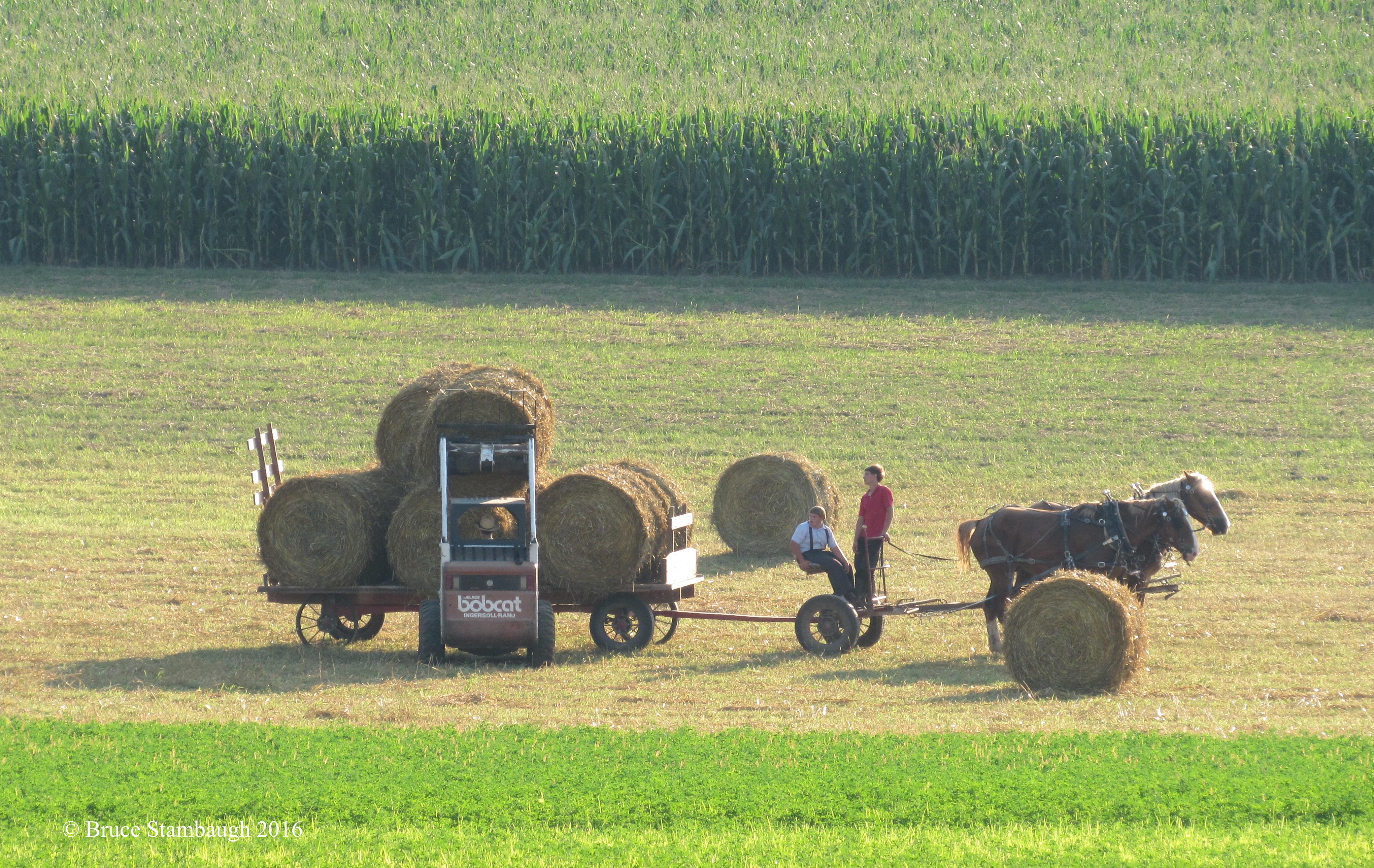 Amish farmer