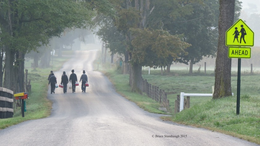 Amish boys, foggy walk