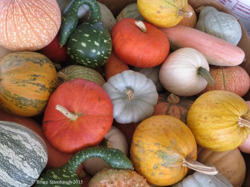 gourds, produce auction