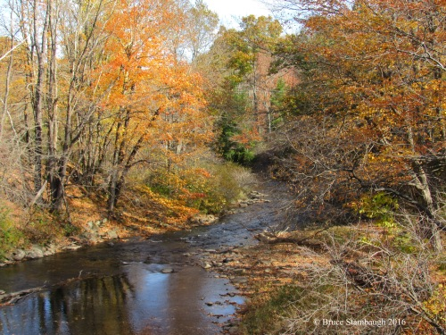 fall colors along mountain stream