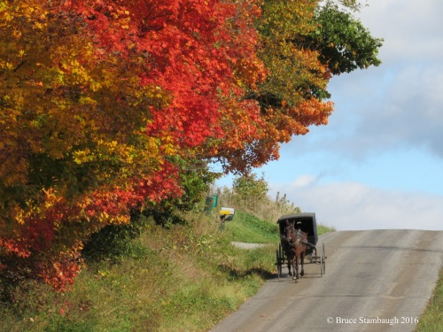 colorful leaves, Holmes Co. OH
