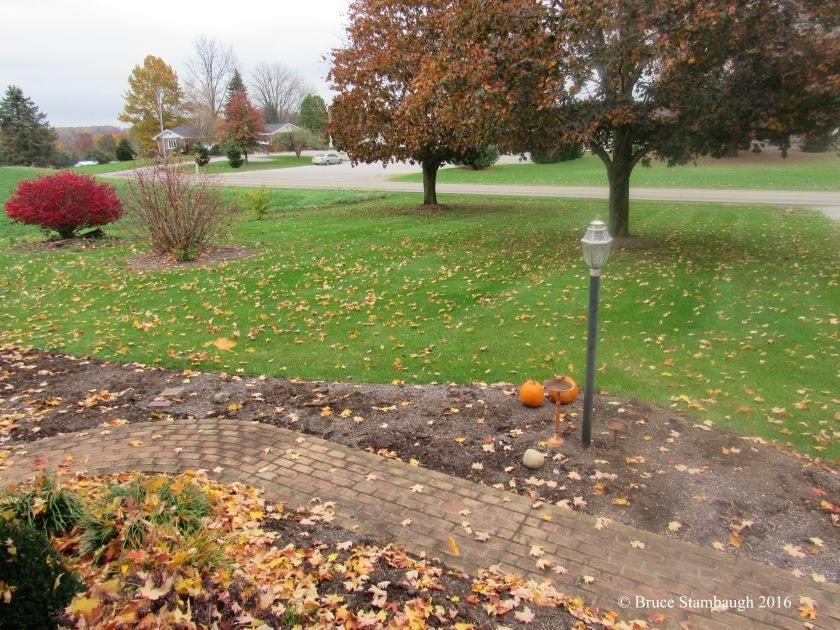 falling leaves, autumn