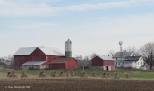 Amish farmstead