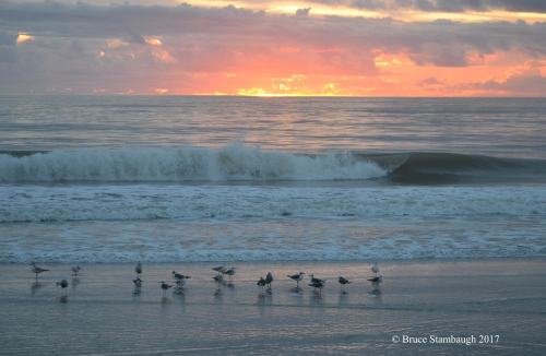 dawn, shorebirds, Atlantic Ocean