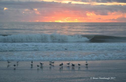 dawn, shorebirds, Atlantic Ocean