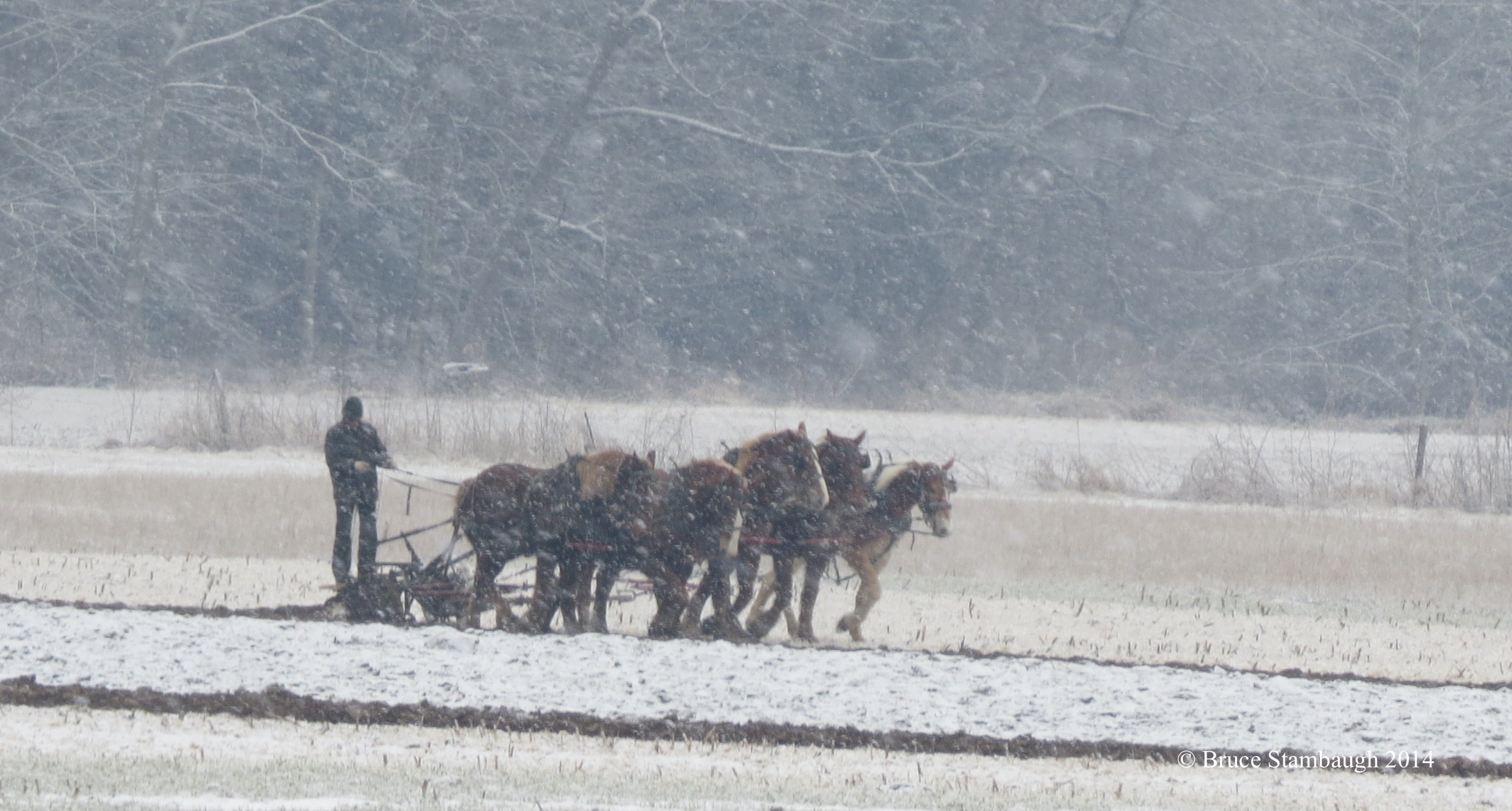 Amish farmer, plowing in the snow