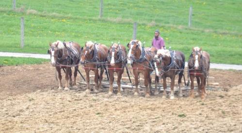 team of horses, Amish farm