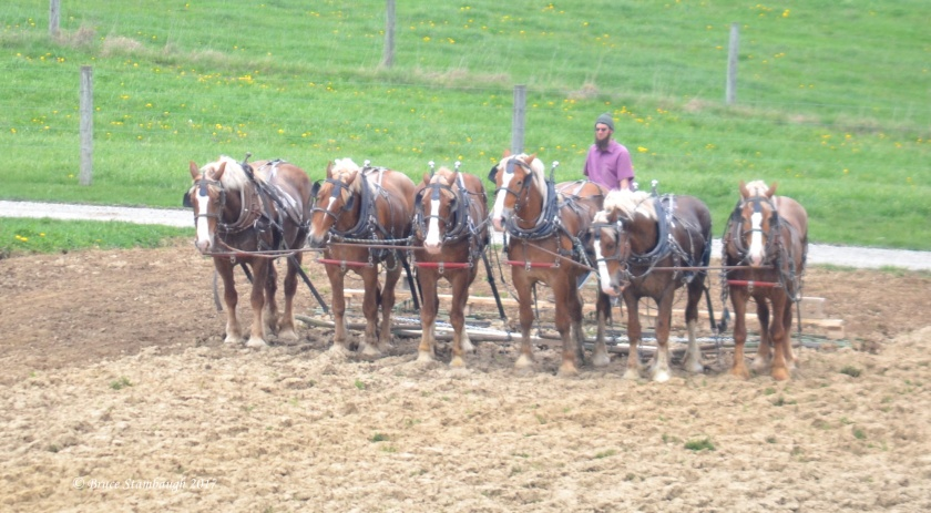 team of horses, Amish farm
