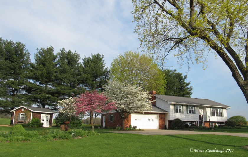 trees in blossom, spring in Ohio
