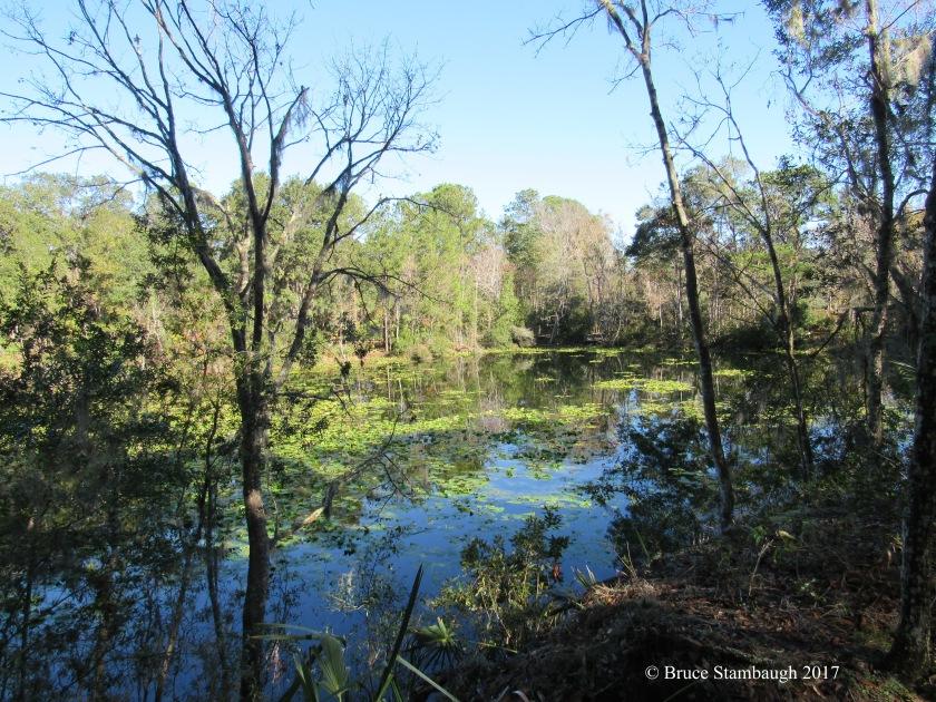Florida pond