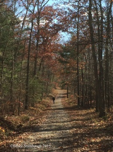 hiking trail, Virginia