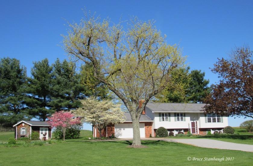 blooming dogwood, saying goodbye