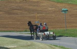horse and wagon, Rockingham Co. VA