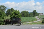 Old Order Mennonite horse and buggy.