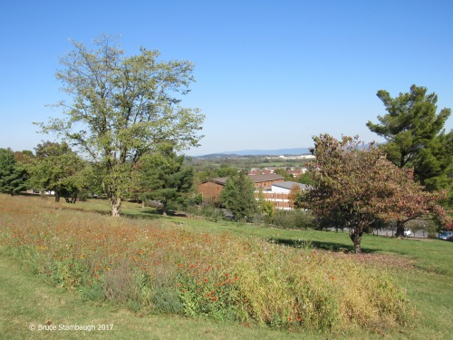 meadow, Eastern Mennonite University, Harrisonburg VA