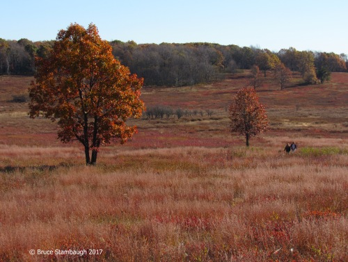 Big Meadows, Shenandoah National Park