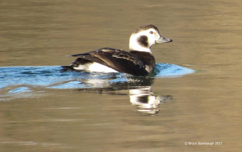 Silver Lake, Dayton VA, birding