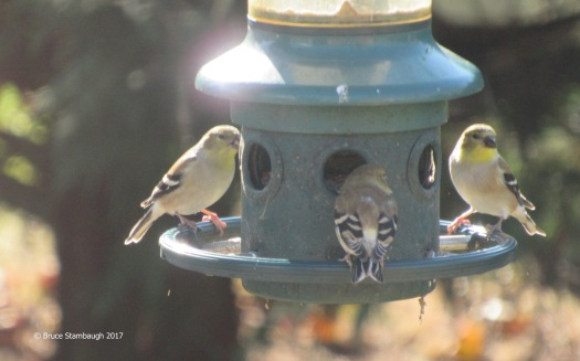 backyard feeder