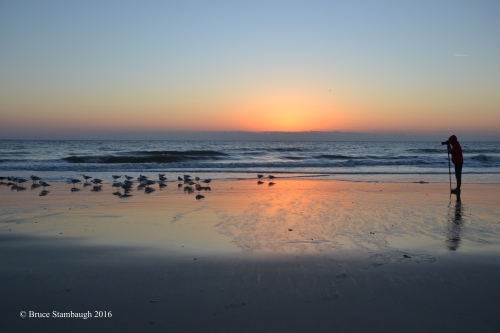 sunrise, shorebirds, photographer
