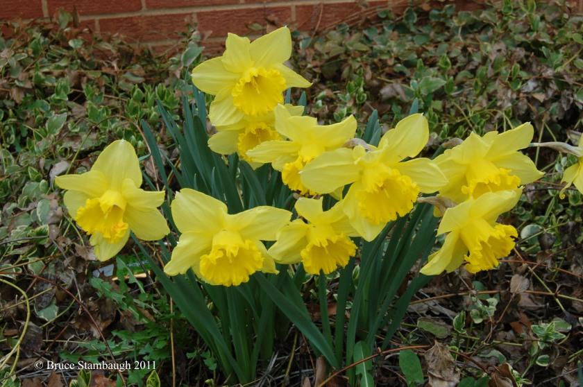 spring, spring flowers