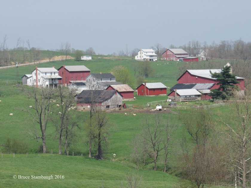 Amish farm, sheep, green fields