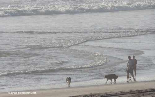dogs on the beach, Fernandina Beach FL