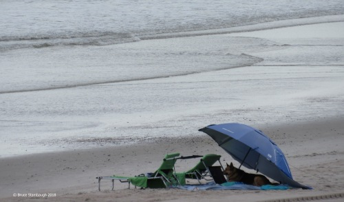 dog under umbrella, Fernandina Beach FL